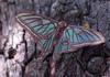 La reina de las mariposas